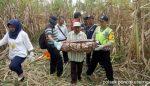 Kakek Usia 100 Tahun Hilang 5 Bulan, Tinggal Kerangka di Tengah Tebu