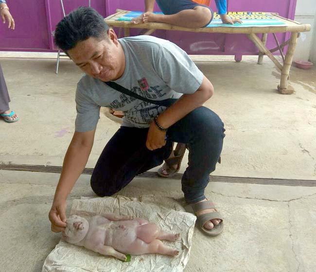 Kambing Beranak Mirip Bayi Manusia di Panarukan-Situbondo