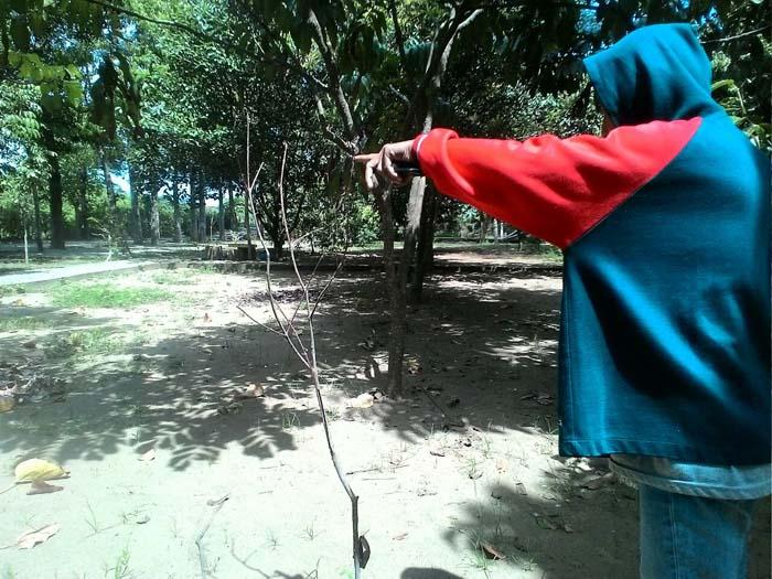 Pengunjung Huko saat melihat tanaman Jambu Air banyak yang mati.