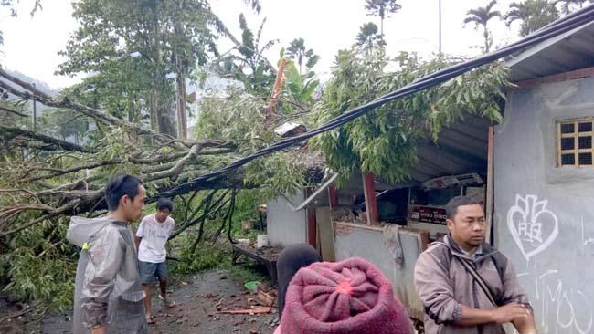 Kota Wisata Batu Dihantui Pohon Tumbang