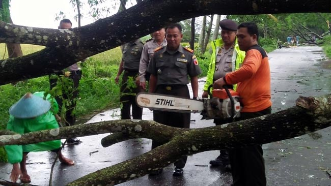 Hujan Deras Berangin, 7 Pohon Tumbang Tutupi Jalan di Kepanjen