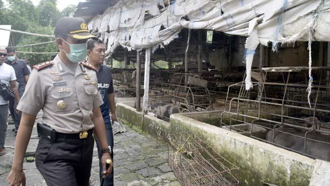 Pemilik Peternakan Babi Segera Diperiksa Satreskrim Polres Blitar