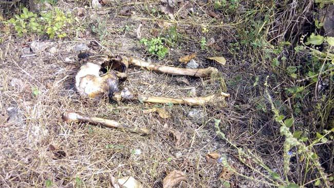 Cari Bonsai di Hutan Selogiri, Nemu Kerangka Manusia
