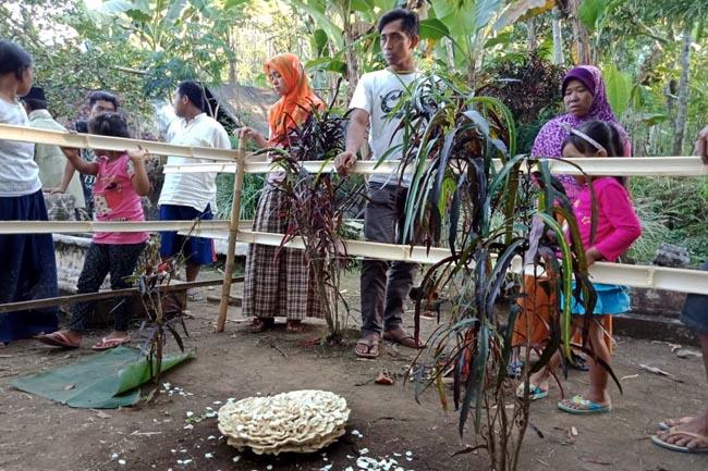 Jamur Unik di Tengah Makam, Bikin Heboh warga Mojan