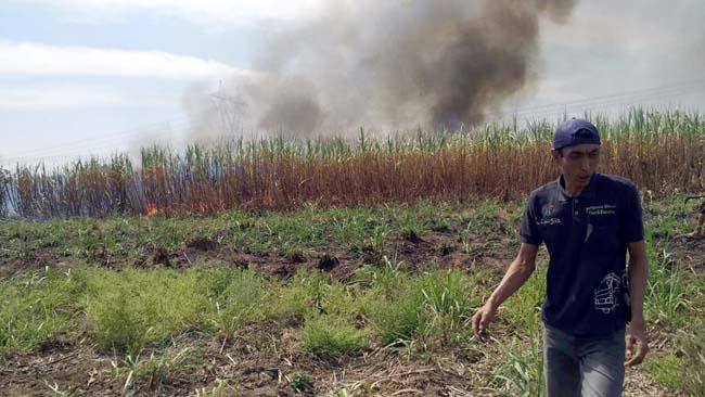 5 Hektar Lahan Tebu di Candisari Ludes Terbakar