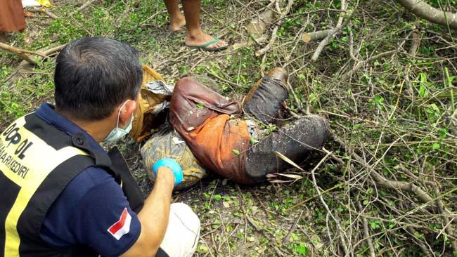 Lima Hari Hilang, Nenek Siah Ditemukan Busuk di Rimbunan Pohon Tumbang