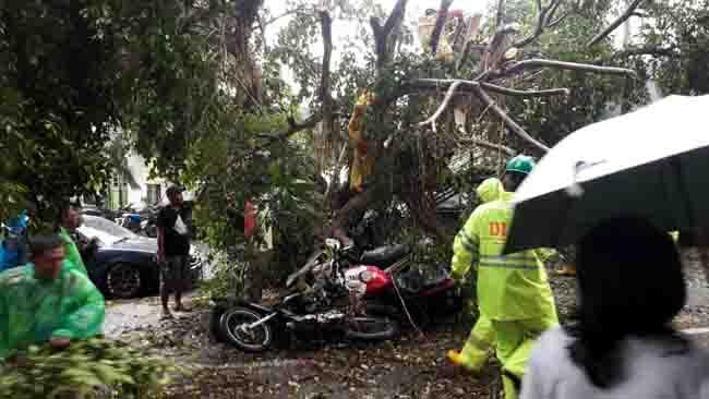 Kota Malang Diterjang Angin Kencang, Motor 3 Wartawan Tertimpa Beringin