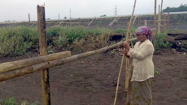 Lahan yang di pagar oleh Sutiha (istimewa)