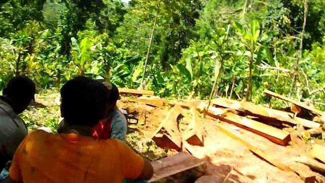 Pembalakan Liar di Hutan Apusan Tambakrejo Sumawe Resahkan Warga