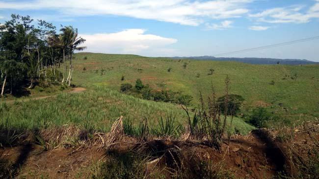 Bagian lahan milik PTPN XII Kebun Pancursari. (Dok)