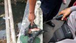 Orok Bayi Dibuang di Sungai Pisangcandi