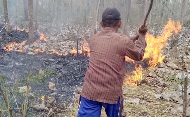 Hutan Jati Banyuwangi Terbakar
